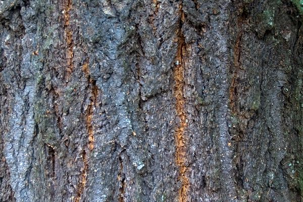 Identifying Rough Wood Species The Wood Wood Talk Online
